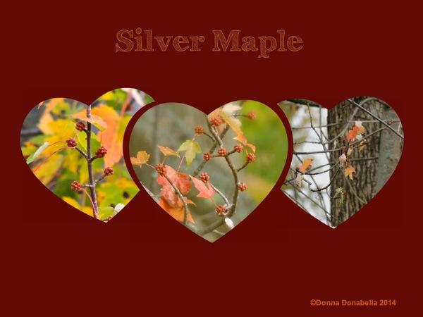 maple collage