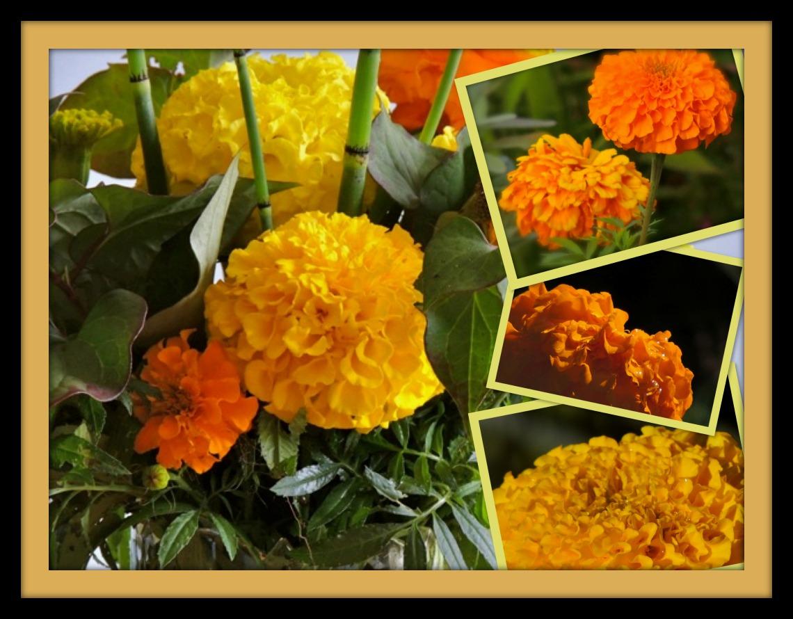 Flower Tales Marigolds Gardens Eye View
