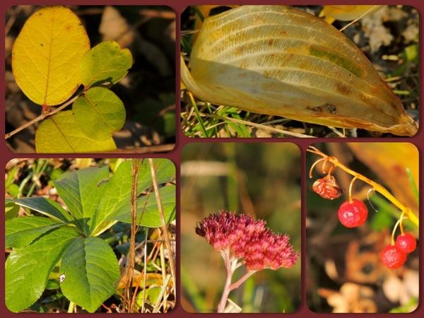 plants ctr garden