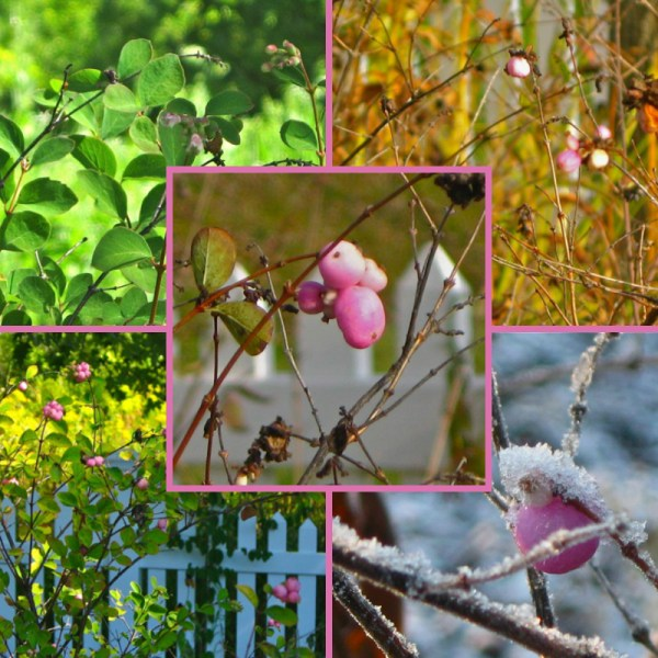 coralberry collage