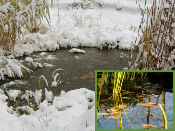 nov frozen pond