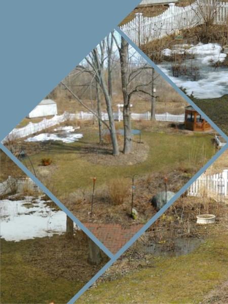 bog garden thaws