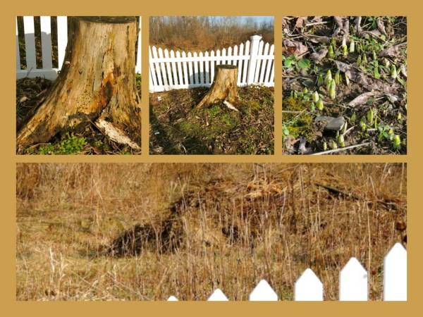 stump collage