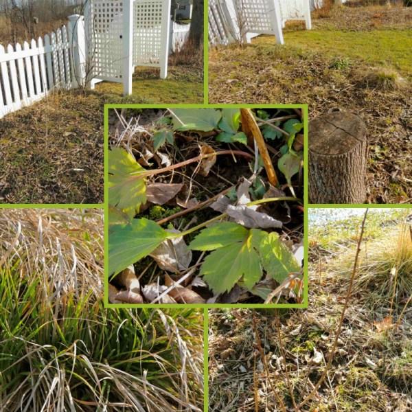 stump garden area collage