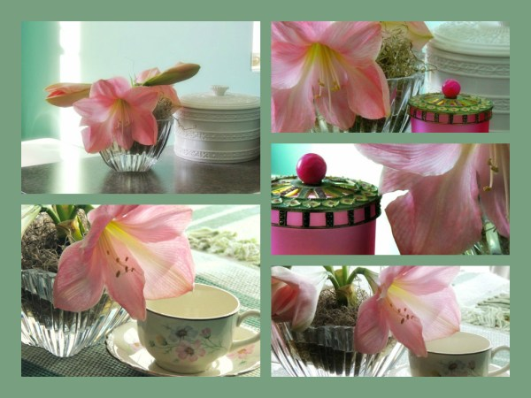 views amaryllis vase collage