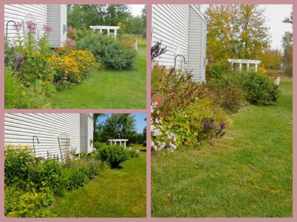 side garden summer