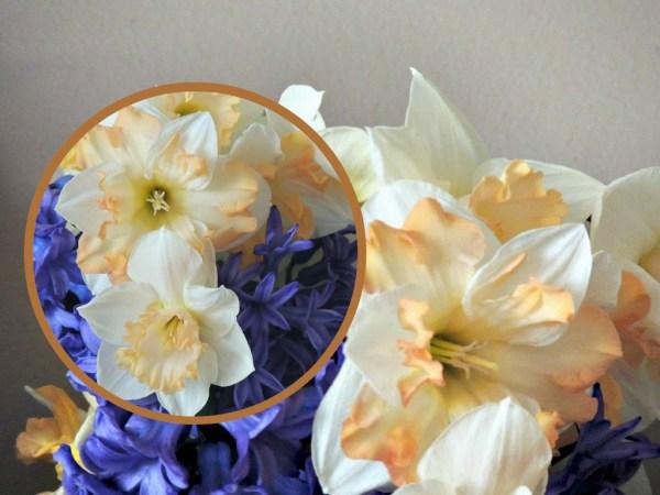 daffs hyacinth collage