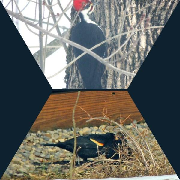 march 15 birds