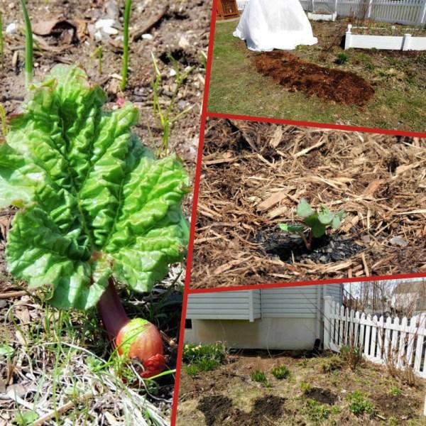 rhubarb collage