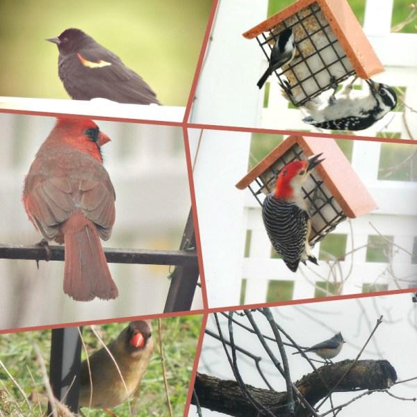 april birds
