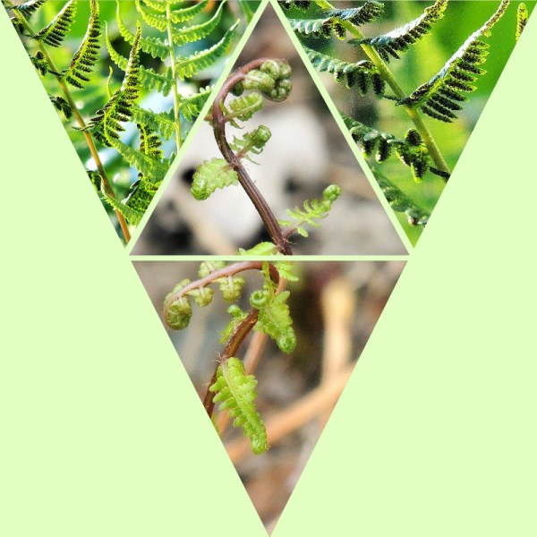 lady fern collage