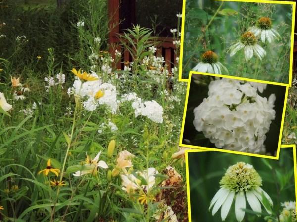 wh garden collage