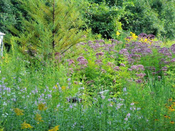 bog garden inside