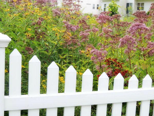 bog garden outside2