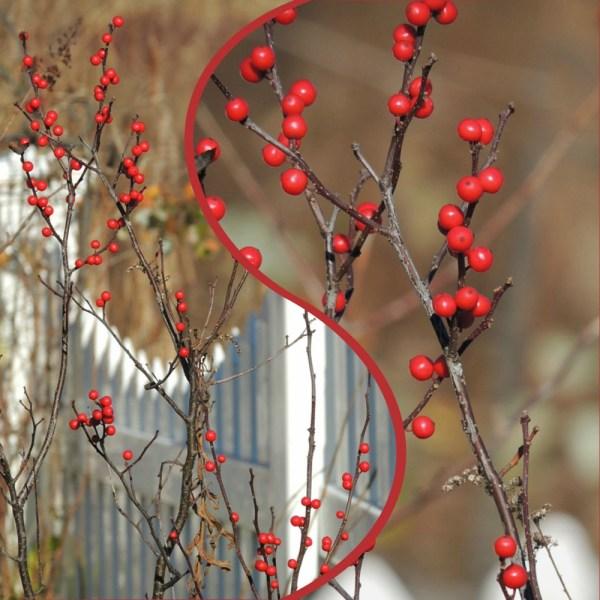 wintergreen collage