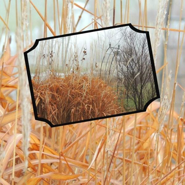 grasses collage
