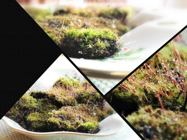 moss vase collage