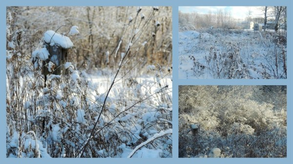 snowy meadow