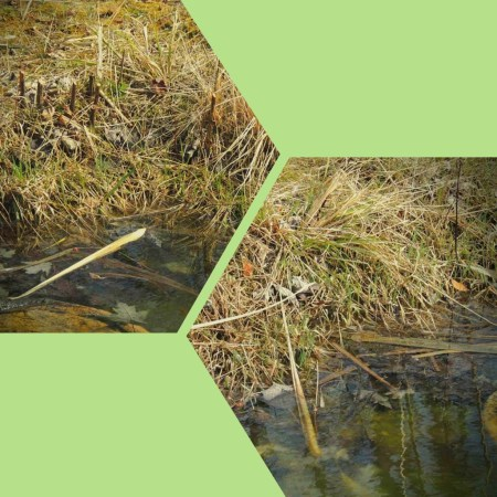 pond edge (1)