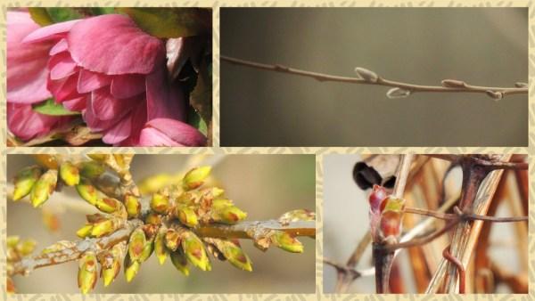 spring growth (1)