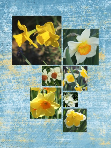 daff collage