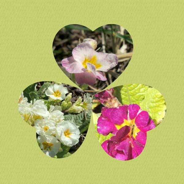 primrose collage