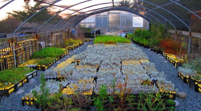 plants garden nursery - Why Yоu Shоuld Suppоrt Yоur Lоcal Garden Centers