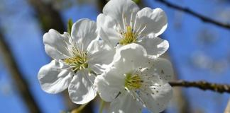 White Flowers Add Colour To The Home And Garden