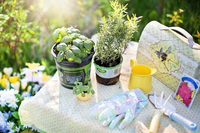 Complete Guide to Growing Herbs in your Garden