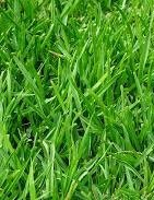 Green Lawn - Every Home Should Never Be Without
