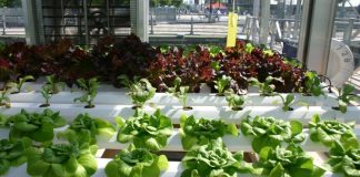 Hydroponic Gardening Guide