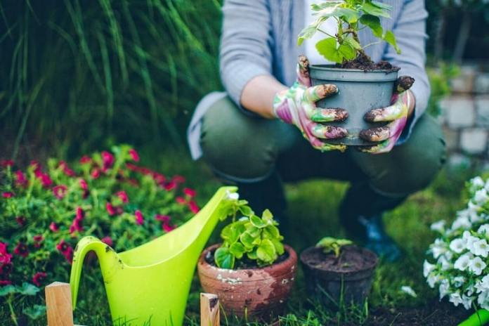 Best Container Garden - A Complete Guide