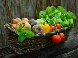 Best Vegetable Companion Planting Guide