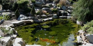 Complete Guide to Build Garden Ponds 2