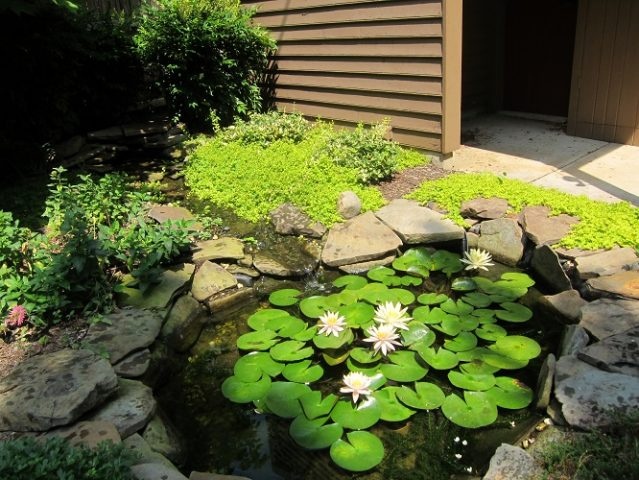 Complete Guide to Build Garden Ponds