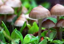 Guide to Growing Magic Mushrooms