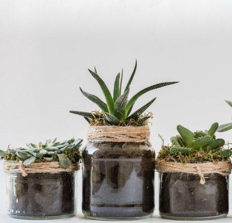 Most Plants Expert Diagnostics
