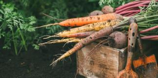 Complete Guide to Growing Vegetable Garden