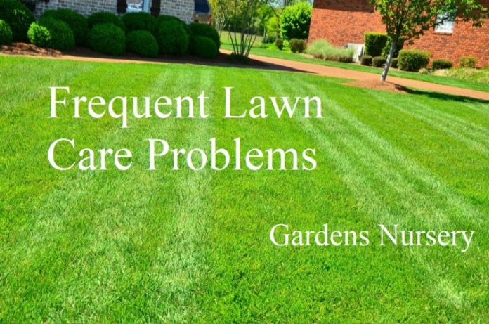 Frequent Lawn Care Problems Answered