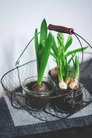 Indoor Gardening - Best Complete Guide