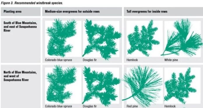 recommended windbreak species