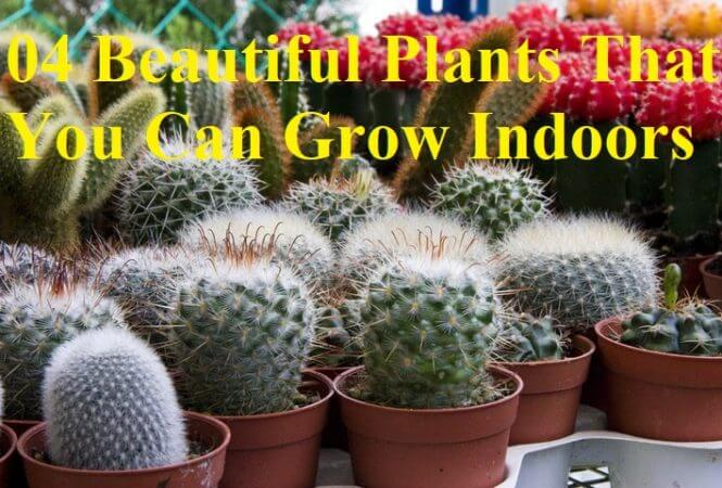 04 Beautiful Plants That You Can Grow Indoors