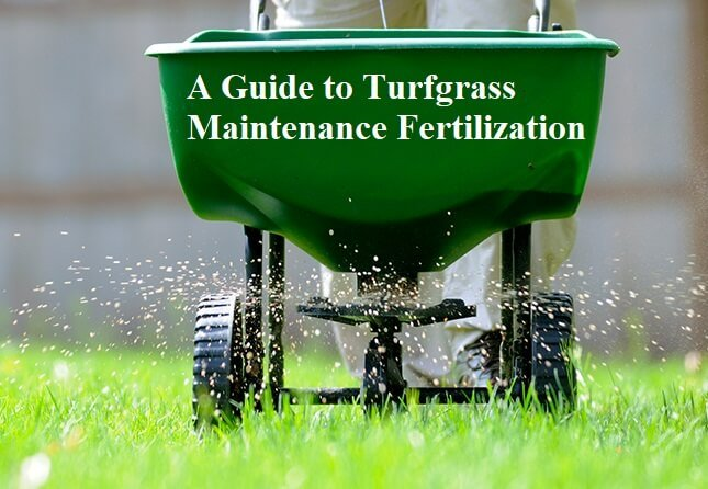 A Guide to Turfgrass Maintenance Fertilization