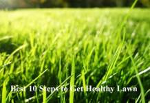 Best 10 Steps to Get Healthy Lawn