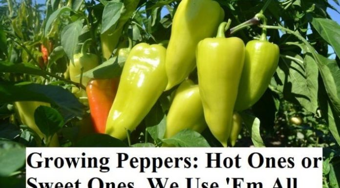 Growing Peppers: Hot Ones or Sweet Ones, We Use 'Em All