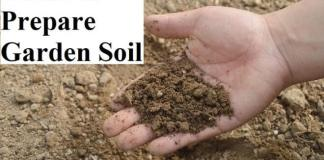 Guide to Prepare Garden Soil