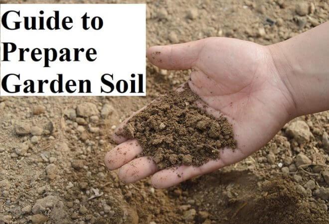 Guide to Prepare Garden Soil