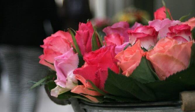 How To Care For Your Miniature Roses From Feeding To Pruning