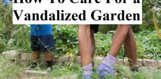 How To Care For a Vandalized Garden