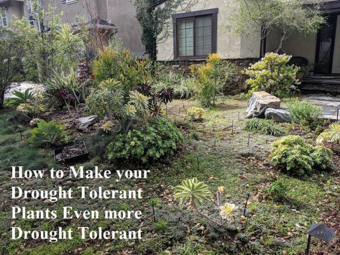 How to Make your Drought Tolerant Plants | GARDENS NURSERY
